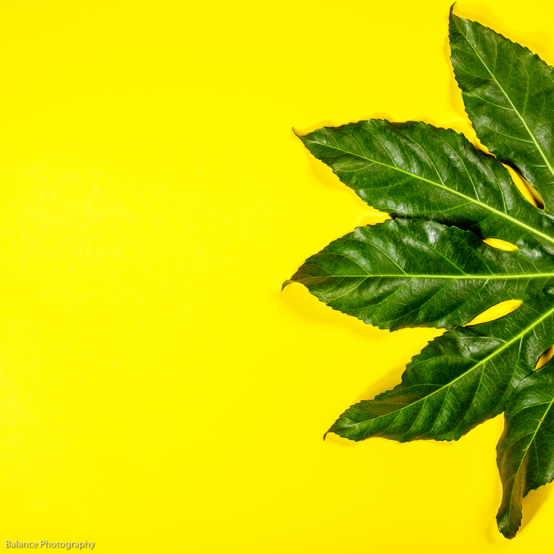 pf_tropical-leaves-on-yellow-background-XTCAF7S